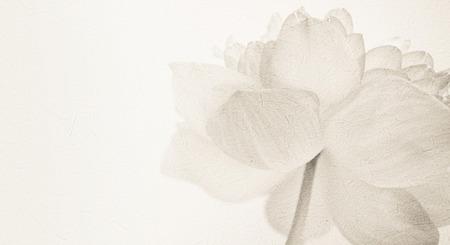 flor de loto: dulce de loto de color en el color y la falta de definición de estilo suave en textura de papel de morera