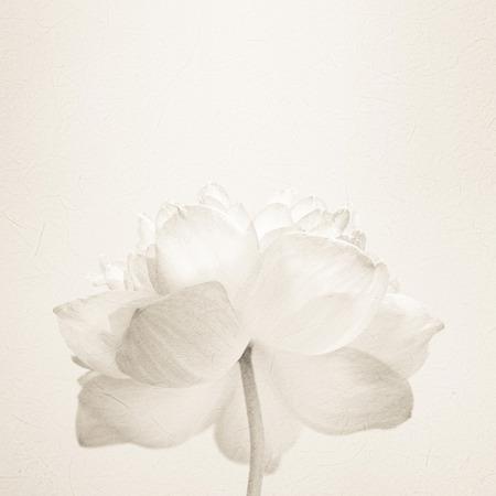 zoete kleur lotus in zachte kleuren en onscherpte stijl op moerbei papier textuur