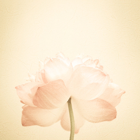sweet color lotus in soft color and blur style on mulberry paper texture Zdjęcie Seryjne - 43810904