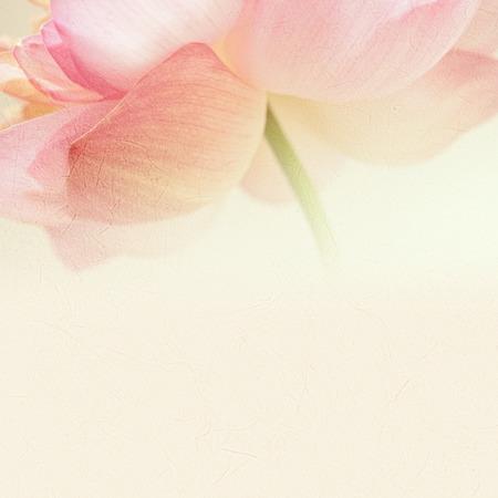craft paper: dulce de loto de color en el color y la falta de definici�n de estilo suave en textura de papel de morera