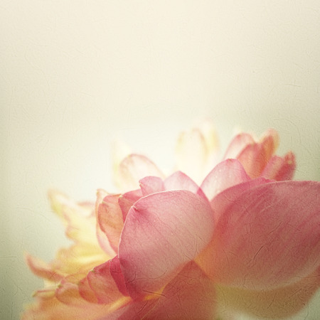 lotus flowers: sweet color lotus in soft color and blur style on mulberry paper texture
