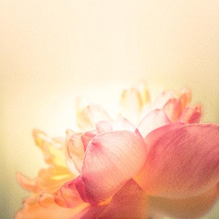 sladký barva lotus v měkké barvy a rozmazání stylem na moruše papíru texturu