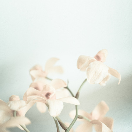sweet color orchids in soft color and blur style for background