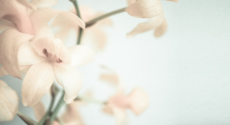 orchids: orchidee colore dolce di colore morbido e di stile sfocatura di sfondo Archivio Fotografico