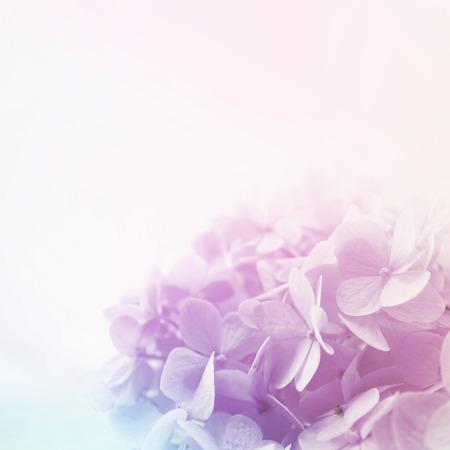 배경 부드러운 색상과 흐림 스타일에 화려한 꽃