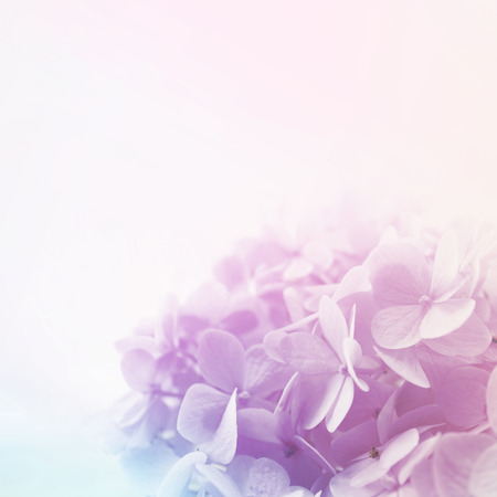 colorful flowers in soft color and blur style for background Stock Photo