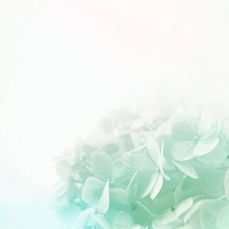 colorful flowers in soft color and blur style for background 스톡 콘텐츠