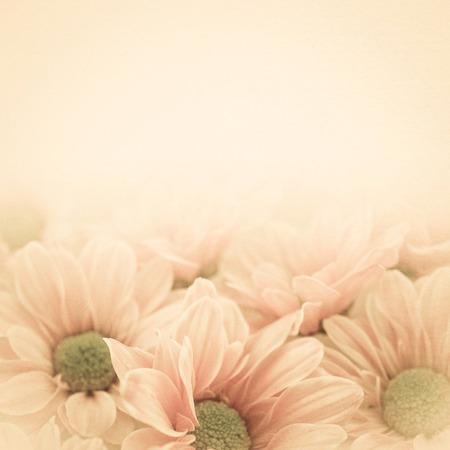 Chrysanthèmes de couleur vintage sur papier de mûrier texture Banque d'images - 44141712