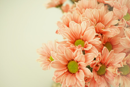 vintage color Chrysanthemums on mulberry paper texture