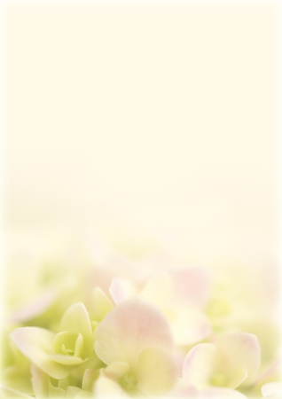 vintage background paper: Pink hydrangea in soft color and blur style for background