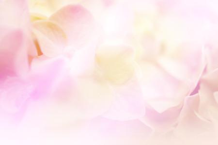 Sweet kleur hortensia in zachte kleuren en vervaging stijl voor de achtergrond Stockfoto