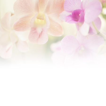 pink orchid: Sweet color blur flower for background