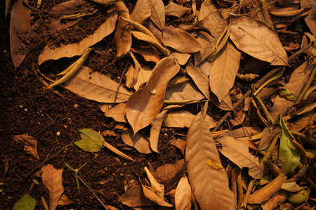 vermiculture: Organic Fertilizer, compost leaf pile Stock Photo