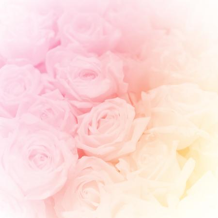 yellow roses: un grupo de rosa, de estilo suave para el fondo Foto de archivo