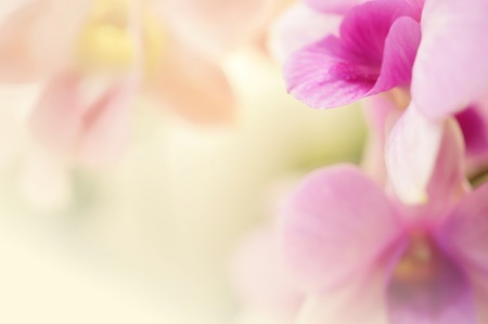 day spa: Sweet color hydrangea in soft color and blur style for background