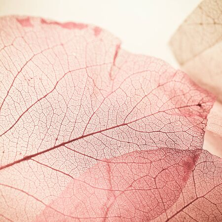fondos violeta: vivid color texture of leaves in soft color style