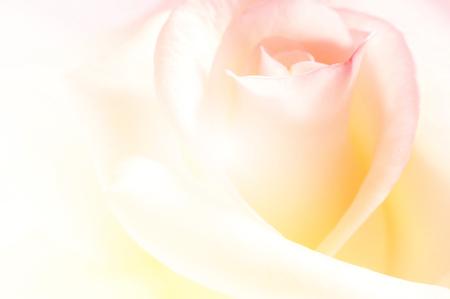 선명한 색상의 장미, 부드러운 배경