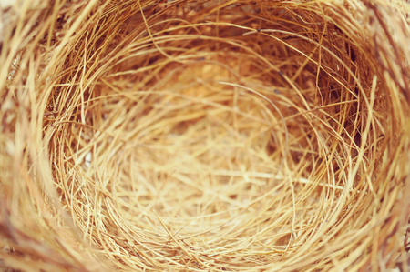 nido de pajaros: nido de pájaro