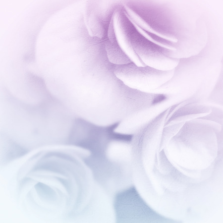sweet color roses in soft color and blur style on mulberry paper texture Zdjęcie Seryjne