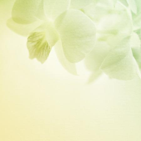背景のための桑紙テクスチャの甘いピンクの蘭