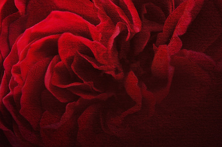 dark red petal rose on mulberry paper texture background Stok Fotoğraf