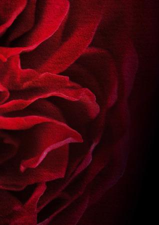 暗い紅色の花びらローズ桑紙テクスチャ背景
