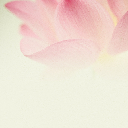 beautiful flowers: sweet pink lotus in soft and blur style for background