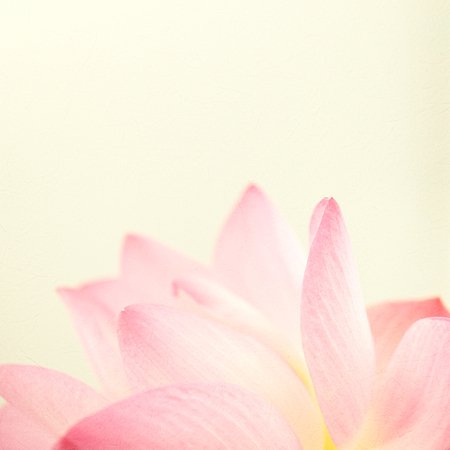 blue grey: sweet pink lotus in soft and blur style for background