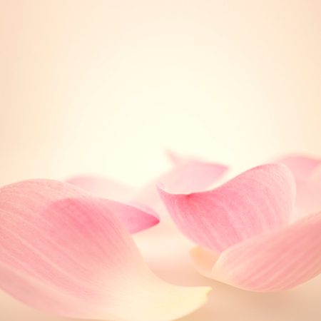 lotus rosa doce em estilo suave e borr