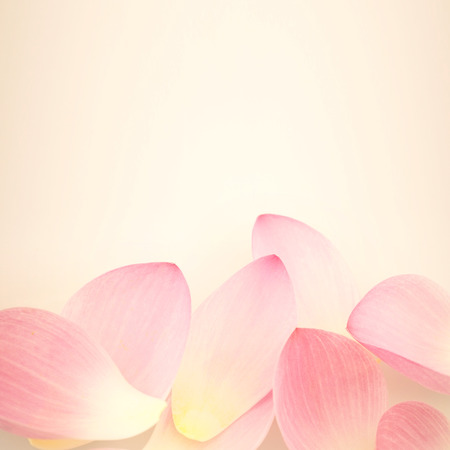 rose petals: sweet pink lotus in soft and blur style for background