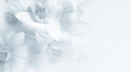 背景の桑紙テクスチャで蘭に甘い 写真素材