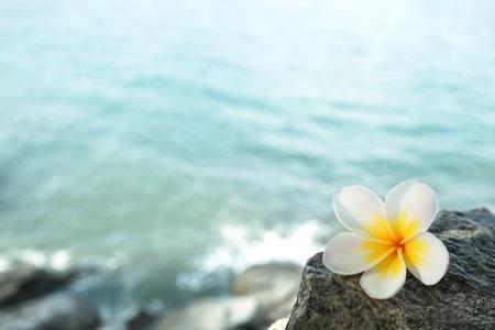 해변에서 바위에 흰색 메리아