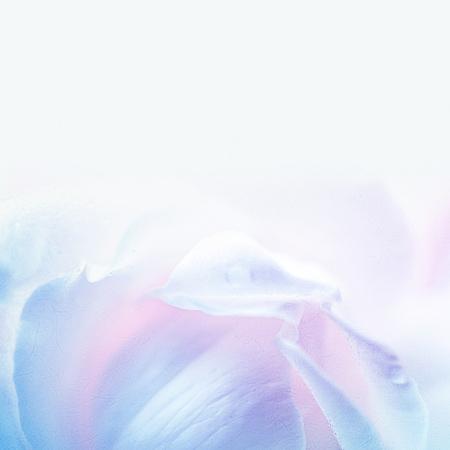 バレンタインデーのコンセプトの背景に桑紙の質感に柔らかい色スタイルで甘いバラ 写真素材