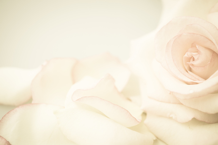 wedding day: pink rose flower in vintage color style for romantic background