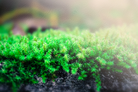 mulberry paper: natural green moss on rock on mulberry paper texture background
