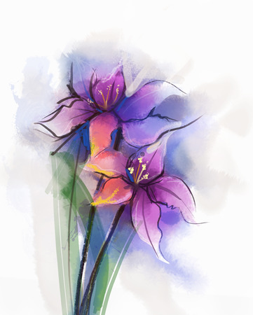 Watercolor painting violet lily flowers blossom. Hand Painted Close up of lilies floral petals in soft color and blurred style on white background