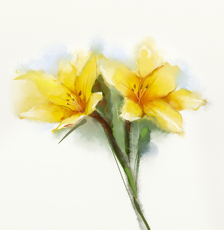 Watercolor painting yellow lilies flower . Hand Painted Close up of lilies floral petals in soft color and blurred  style on white background Stock Photo