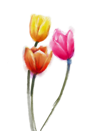 abstract flowers: Still life of tulip flower. Watercolor painting red and yellow tulip. Isolated painted flowers on white background
