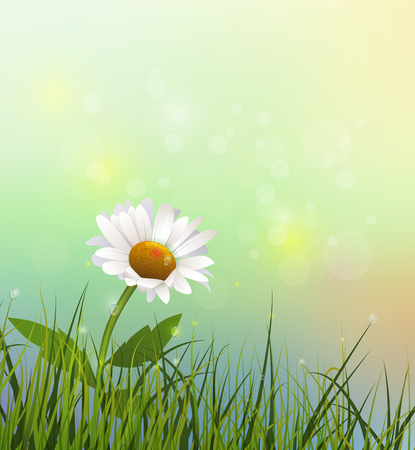 gerbera daisy: Vector illustration green grass and white flower. Spring nature field with Gerbera- Daisy flower at meadow and water drops dew on green leaves. Blue- green pastel color and bokeh effect background