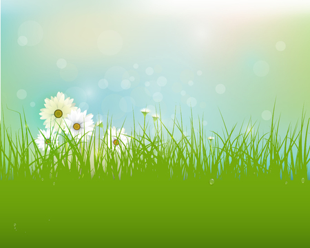 gerbera daisy: Vector Spring nature field with green grass, white Gerbera- Daisy flowers and water drops dew on green leaves, with bokeh effect on blue-green pastel colorful background .Blank space for your design