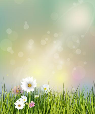 벡터 일러스트 레이 션 녹색 잔디, 흰색 봄 자연 필드 Gerbera, 데이지 꽃과 초원 및 물 야생화 녹색 잎, 푸른 파스텔 컬러 배경에 Bokeh 효과 에이 슬 방울 일러스트
