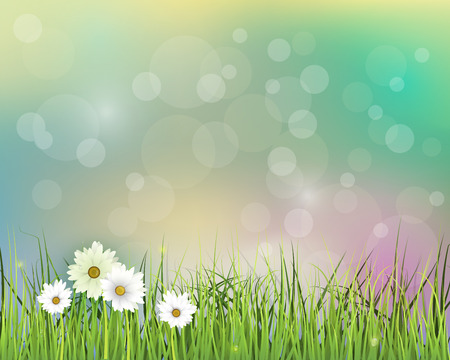 gerbera daisy: Vector illustration Spring nature field with green grass, white Gerbera- Daisy flowers at meadow and water drops dew on green leaves, with bokeh effect on blue-green pastel colorful background