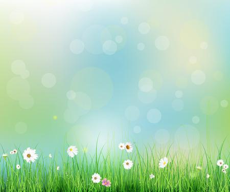 primavera: ilustración vectorial campo de la naturaleza del resorte con la hierba verde, flores blancas Gerbera- margarita en el prado y las gotas de agua de rocío en las hojas verdes, con efecto bokeh en colores pastel de fondo azul-verde