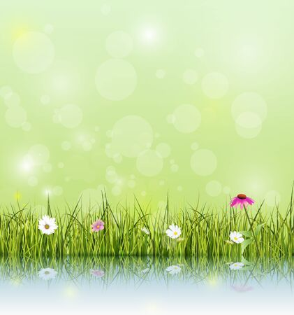 color reflection: Vector illustration Green grass and echinacea  purple coneflower flower, white daisy and wildflower with reflection on water. And soft green color with bokeh background. Blank space for your design