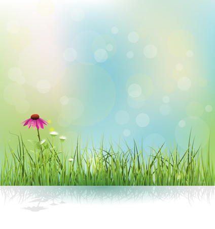 Vector illustration Spring nature field, green grass, white flowers meadow and echinacea  purple coneflower flower with shadow. Water drops on green leaves with bokeh on blue-green color background. Иллюстрация