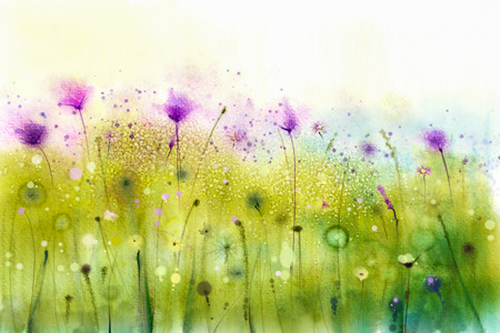 fields: Abstract watercolor painting purple cosmos flowers and white wildflower. Wild flowers meadow, green field paintings. Hand painted floral, flower in meadows. Spring flower seasonal nature background. Stock Photo
