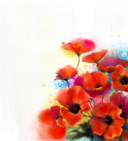 papaver: Watercolor red poppy flower painting. Hand paint poppies flowers in soft color and blur style, White color background. Hand painted Spring floral seasonal nature background.
