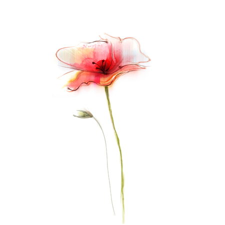 pink flower background: Watercolor painting poppy flower. Isolated flower on white background. Pink and red poppy flower painting. Hand painted watercolor floral, flower background. Stock Photo