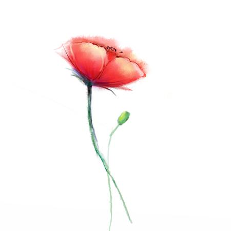 poppy: Pintura de la acuarela de la flor de la amapola. flores aisladas sobre fondo blanco. pintura de color rosa y rojo de la flor de la amapola. Mano acuarela pintada de flores, flores de fondo.
