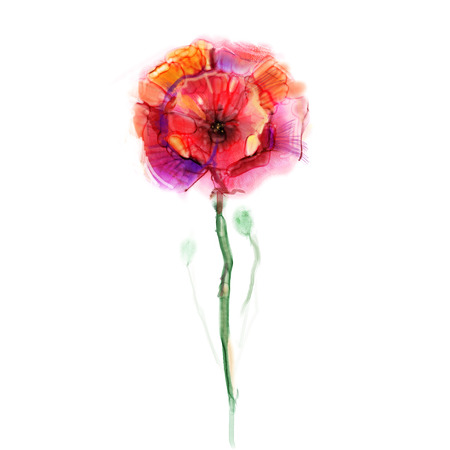 pink flower background: Watercolor painting poppy flower. Isolated flowers on white background. Pink and red poppy flower painting. Hand painted watercolor floral, flower background. Stock Photo